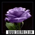 soEmo.co.uk - Emo Kids - RosemaryRivers589
