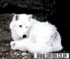 soEmo.co.uk - Emo Kids - whitewolf19
