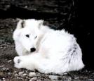 whitewolf19 - soEmo.co.uk