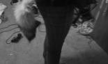 Emo Boys Emo Girls - xShadowPawSkyx - thumb104188