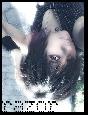 Emo Boys Emo Girls - xrazorx - thumb929